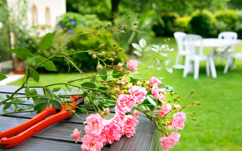 The 9 Best Gardening Tips and Tricks for Beginners