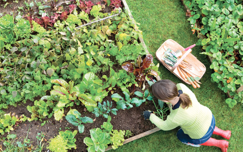 Whether you're new to growing or a seasoned expert, our collection of 25 vegetable gardening tips will help. Enjoy!